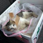 ネコ、ついに病院にいく。