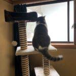 ネコ、キャットタワーで遊ばない。