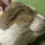 ネコ、スッキリンを爆食する。