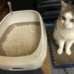 ネコ、デオトイレを気に入る。