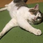 ネコ、家猫になって半年。